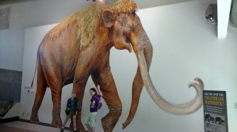 the Columbian mammoth
