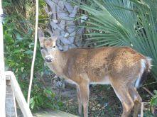 this deer is very friendly