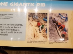 about the giant rib