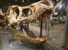 a giant t-rex skull